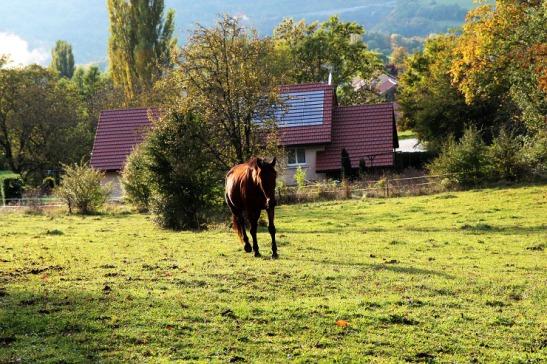 jura horse
