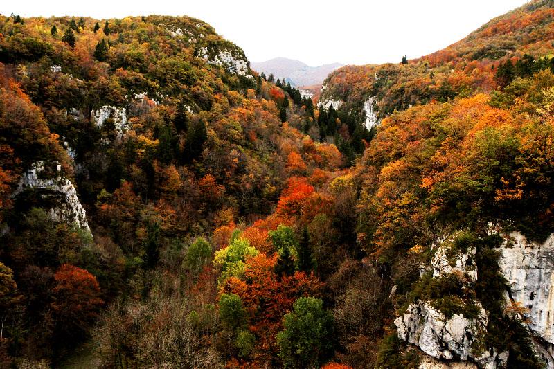 autumn jura
