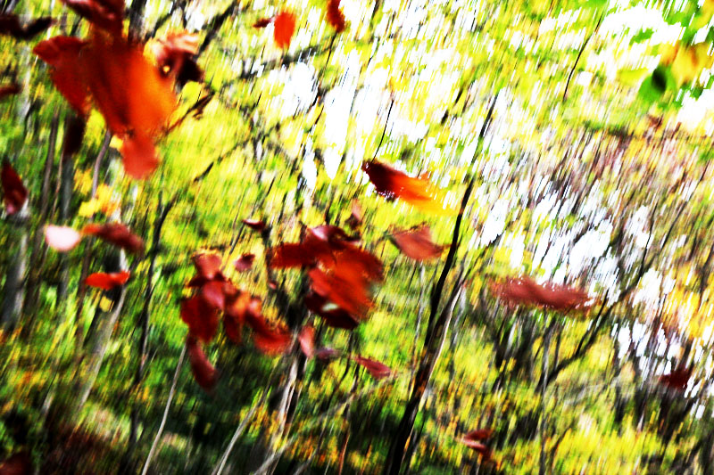 autumn jura-leaves