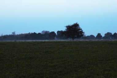 A thin layer of evening frost across the field
