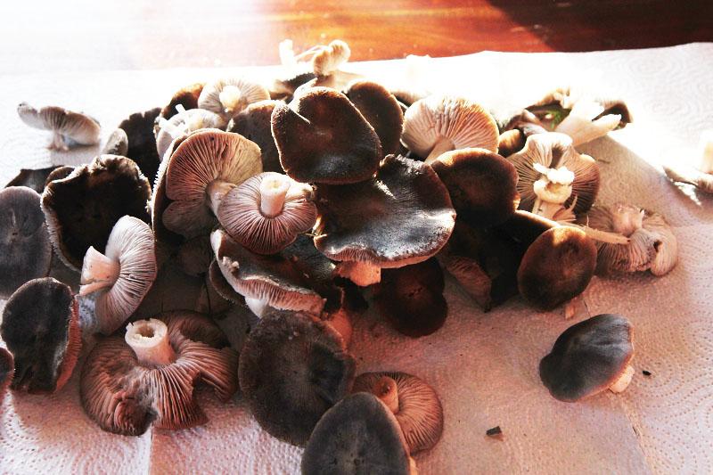 mushrooms-french