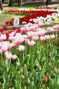 tulip park (1)