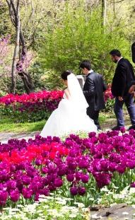 tulip park (4)
