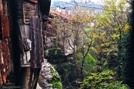 safran valley