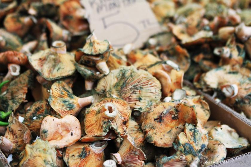 Turkish-mushroom
