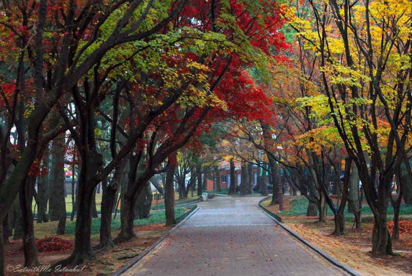 gyeongju autumn