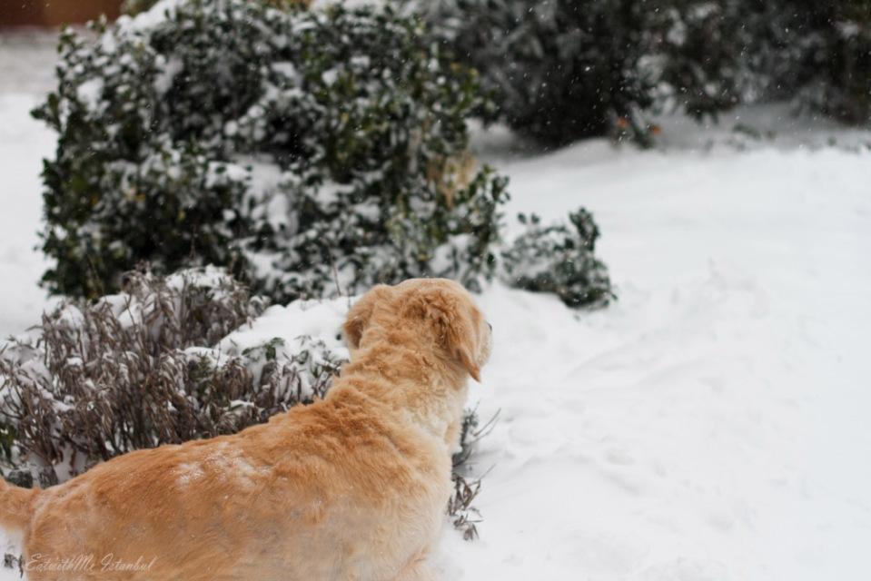 dusha-snow-sig