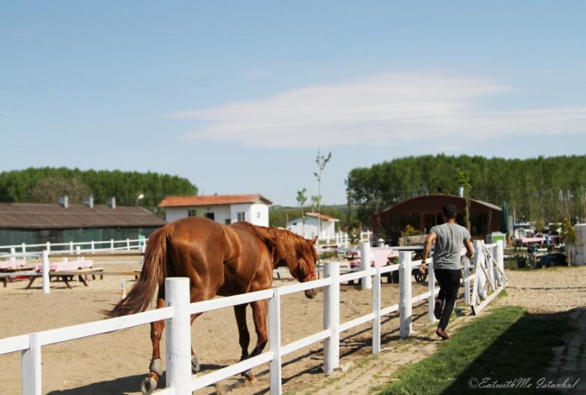 edirne horse