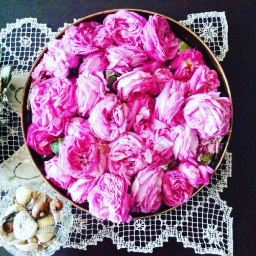 rose jam
